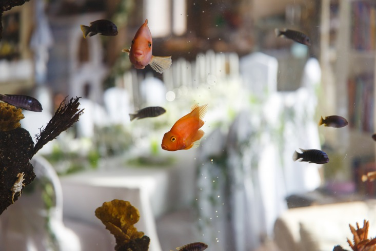 Fish in aquarium at a reception venue